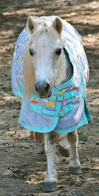 "66"" Pony Poppins 600D ""Blankies"" Expression Turnout Blanket, 240g"