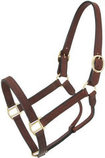 Royal King Preakness Leather Track Halter