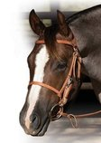 Professional's Choice Trail Bridle