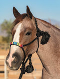 Professional's Choice Beaded Cowboy Braided Halter