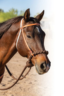 Professional's Choice Loping Hackamore