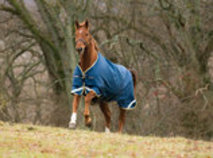 Rambo 1000D Original with Leg Arches Horse Blanket, 100g
