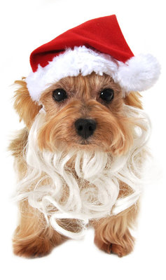 Dog Santa Hat with Beard