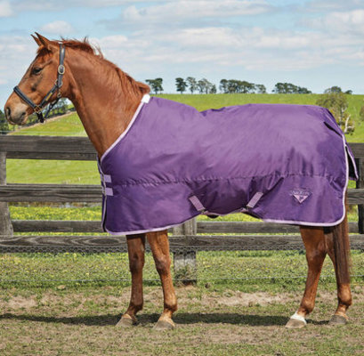 Saxon 600D Standard Neck Medium Weight Blanket, Grape