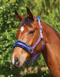 Saxon Element Polar Fleece Halter