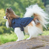 Scarf Dog Sweater, Blue