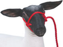 Sheep & Goat Poly Rope Halter