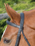 Shires Phoenix Figure-8 Bridle