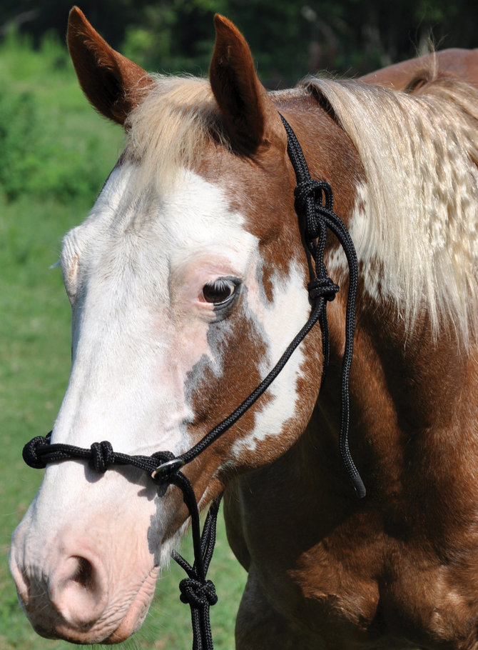 Side pull rope horse halter by mustang mfg jeffers pet side pull rope halter fandeluxe Gallery