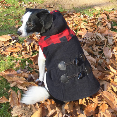 Small, Plaid Trim Dog Coat