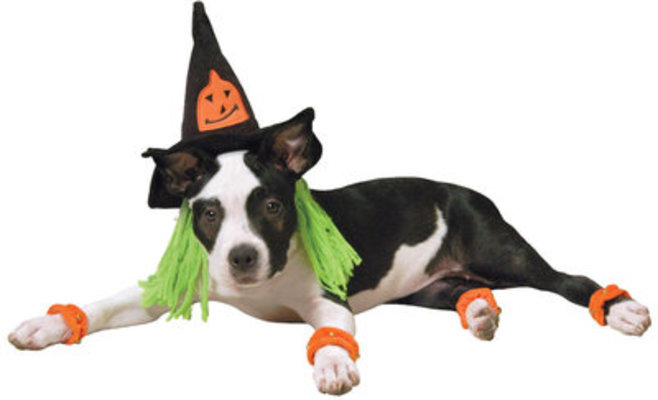 Witch Costume, Sm. (dogs 13 - 30 lbs)