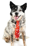 Snowflake Holiday Necktie by Fashion Pet