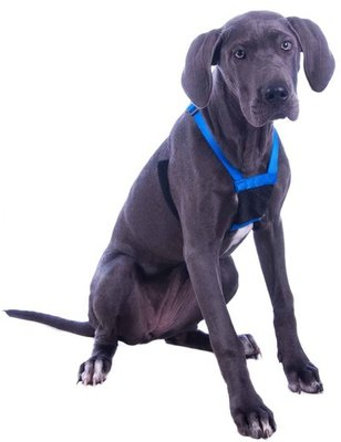 Sporn Mesh Non-Pull Harness, Medium, Blue