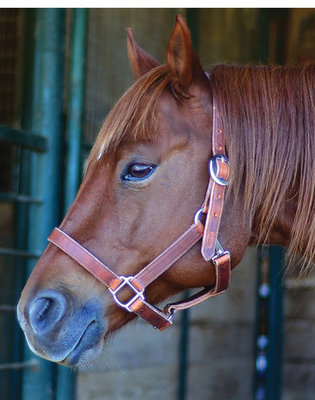 Stock Horse Leather Halter