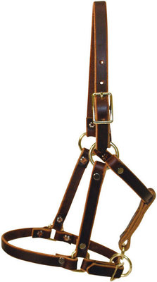 Riveted Foal Halter, suckling