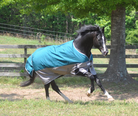 TuffRider Major 1200D Standard Neck Turnout Blanket, 220g