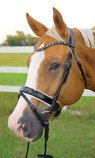 Uniquely English Elegance Dressage Bridle, White Padding