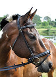 Uniquely English Padded Bridle, Black