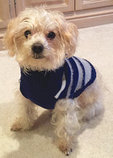 Variegated Stripe Dog Sweater
