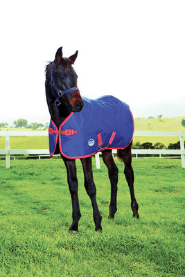 WeatherBeeta 1200D Medium Weight Foal Blanket