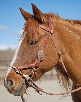 Justin Dunn Side Pull/Bitless Bridle