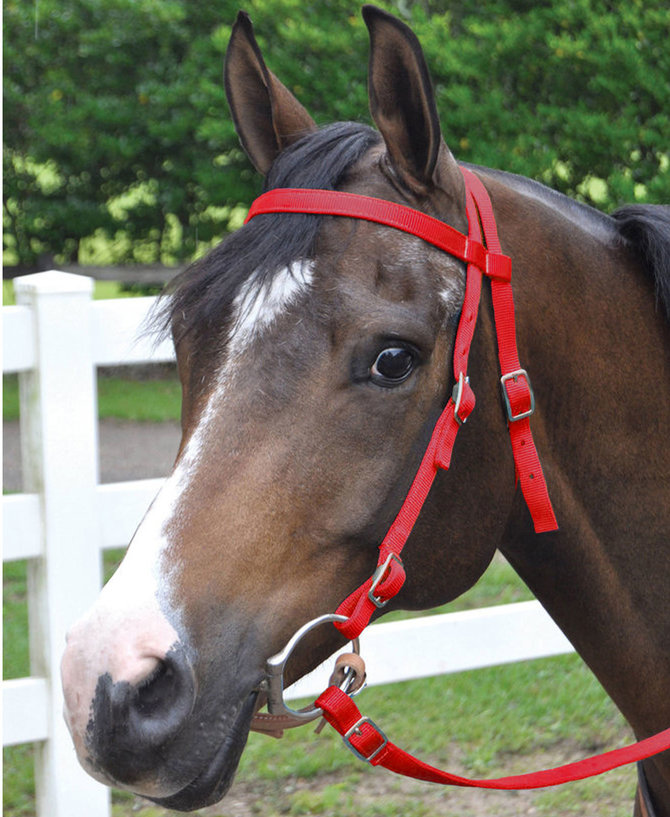 Red turquoise and black reins