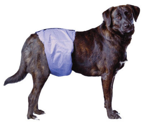 PoochPants Reusable Male Wraps