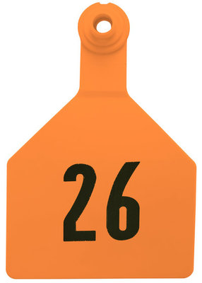 Z2 2-Piece Numbered Maxi Tags, Orange