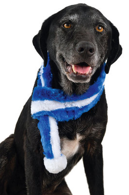 Zippy Paws Blue Scarf
