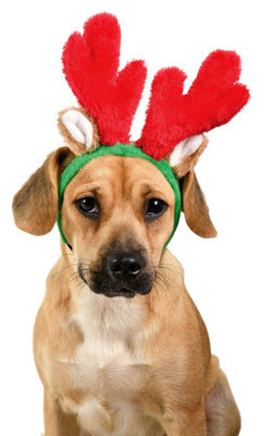 Zippy Paws Christmas Antlers Headband