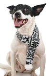 Zippy Paws Reindeer Scarf, Black/White